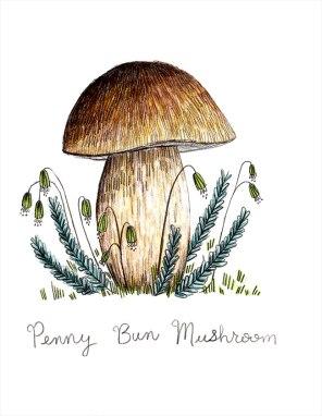 Penny Bun Mushroom
